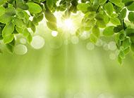 春天好看绿色唯美ppt背景图片