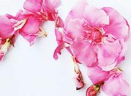 粉色花精美浪漫背景图片素材