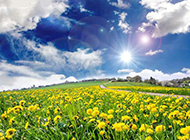 绿色植物优美自然图片壁纸