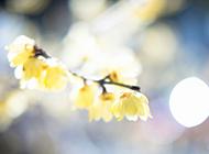 简约唯美花卉风景壁纸精选