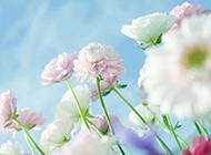 唯美风景非主流鲜花壁纸