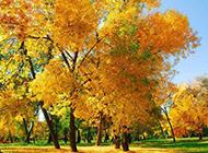 清新耀眼的秋天植物图片素材