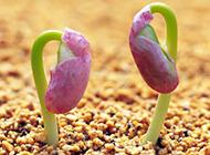 种子发芽植物图片