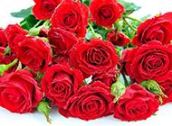 浪漫红红火火的玫瑰花束