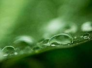 绿色护眼植物露珠风景桌面壁纸