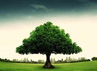 公益海报素材 一棵绿树图