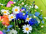 春天娇艳花卉植物图片大全壁纸