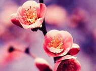 精美花卉风景高清壁纸图片