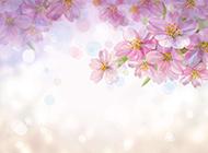 唯美手绘花朵背景素材