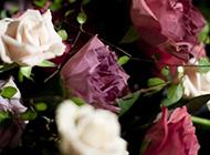 粉色玫瑰花壁纸图片唯美浪漫