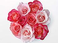 粉玫瑰花图片浪漫花束背景分享