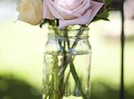 玻璃瓶里的粉色玫瑰浪漫植物风景