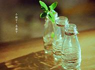 瓶子与小木桌唯美图片