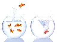 高清美丽时尚鱼缸背景图片