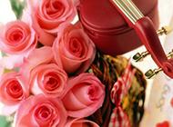 文艺小提琴粉色鲜花浪漫风格高清壁纸