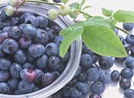 水果皇后蓝莓图片