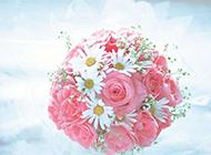 浪漫情人节主题粉玫瑰精致背景图片
