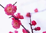 三月是桃花的世界