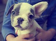 萌萌的狗狗可爱表情图片集锦
