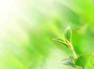纯淡绿色植物背景图片