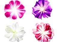 植物创意素描图片优雅清新