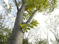 南方常见树木摄影图片