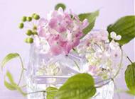 唯美鲜花图片大全静物特写素材