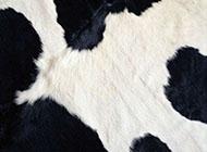 唯美黑白奶牛皮毛背景图片
