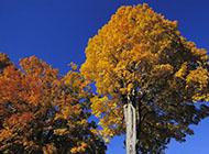 秋天的树高清摄影图片