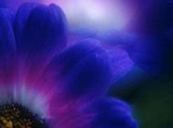 紫色的花背景图片素材