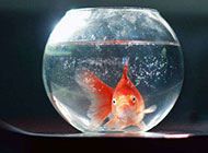 透明金鱼缸唯美意境美图背景