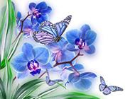 蓝蝴蝶花图片素材推荐