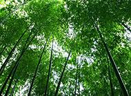 竹林深处美景精美图片