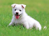 可爱的动物小狗高清壁纸