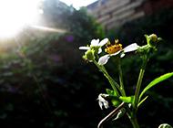 顽强生长的野花图片