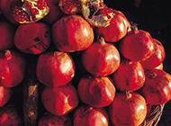 鲜艳夺目的红石榴图片