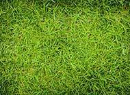 草地复古绿色素材背景图