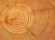 木头圆形年轮时尚背景图竖图