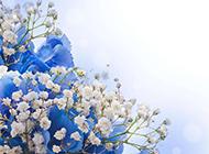 素雅蓝色满天星唯美花卉素材