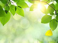 清晨阳光下的树叶图片素材