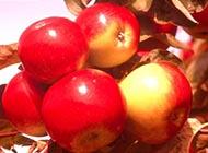 色彩艳丽的红苹果图片