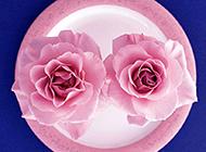 粉玫瑰高清唯美图片素材