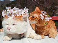 圆脸猫咪卖萌图片大全可爱动物素材