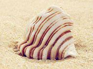 静躺沙滩的贝壳唯美背景图片