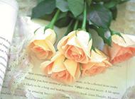 黄玫瑰花恋上书本唯美图片