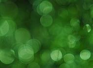 疯狂猜图绿色梦幻光晕背景