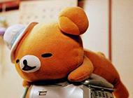 小熊可爱卖萌图片精选卡通素材分享