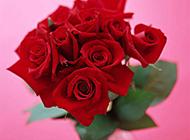 插在花瓶里的火红玫瑰花束