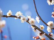 浪漫桃花盛开春日小清新壁纸