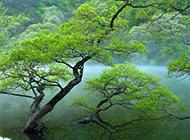 云雾缭绕的绿树高清图片